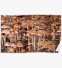 City Of Angels! - LBM - Little Brown Mushroom - NZ Poster