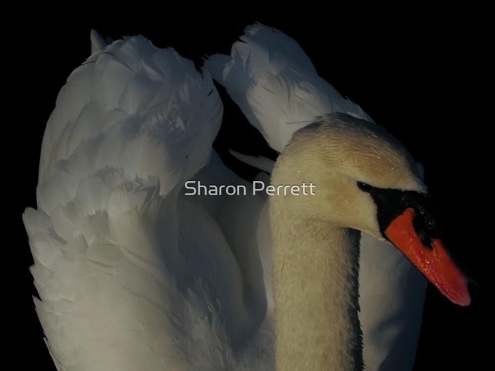 In the morning light - 2 by Sharon Perrett