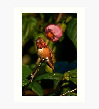 Kolibri in blühendem Ahornbaum Kunstdruck