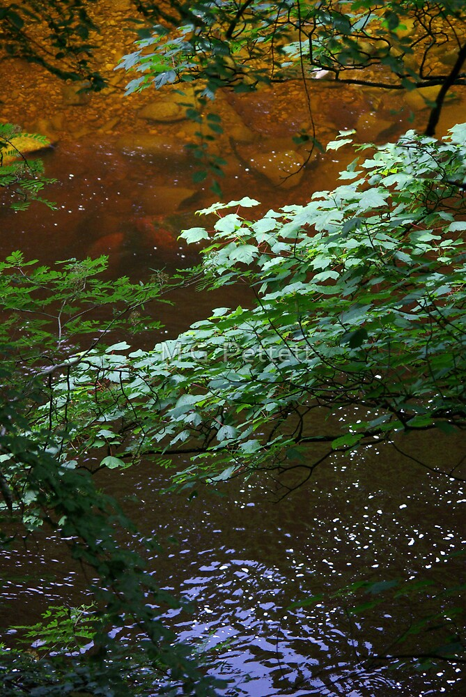 River Spectrum by M G  Pettett