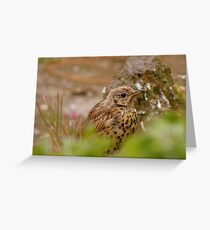Am I Invisible Yet? -  Juvenile Song Thrush - NZ Greeting Card