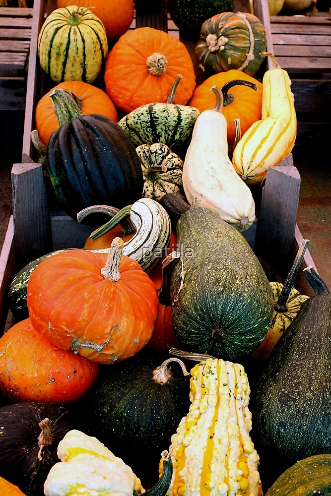 Autumn Squashes & Pumpkins Display by patjila