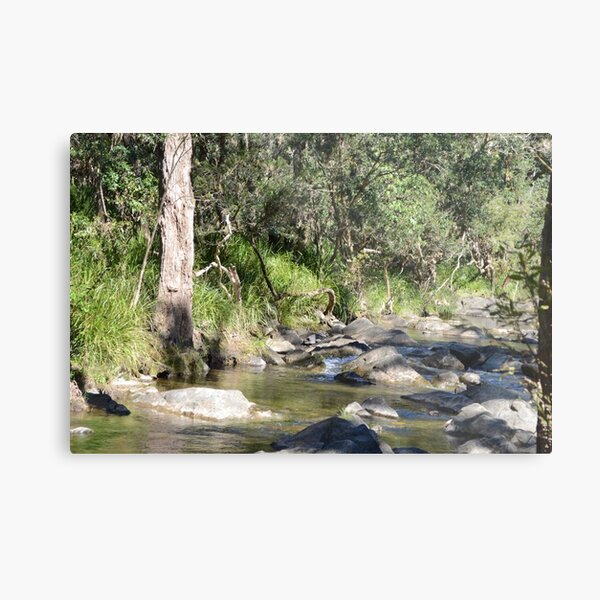 Creek in South East Queensland Metal Print