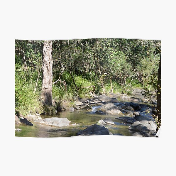 Creek in South East Queensland Poster