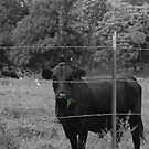 Cow on Hillside, Hana by APhillips
