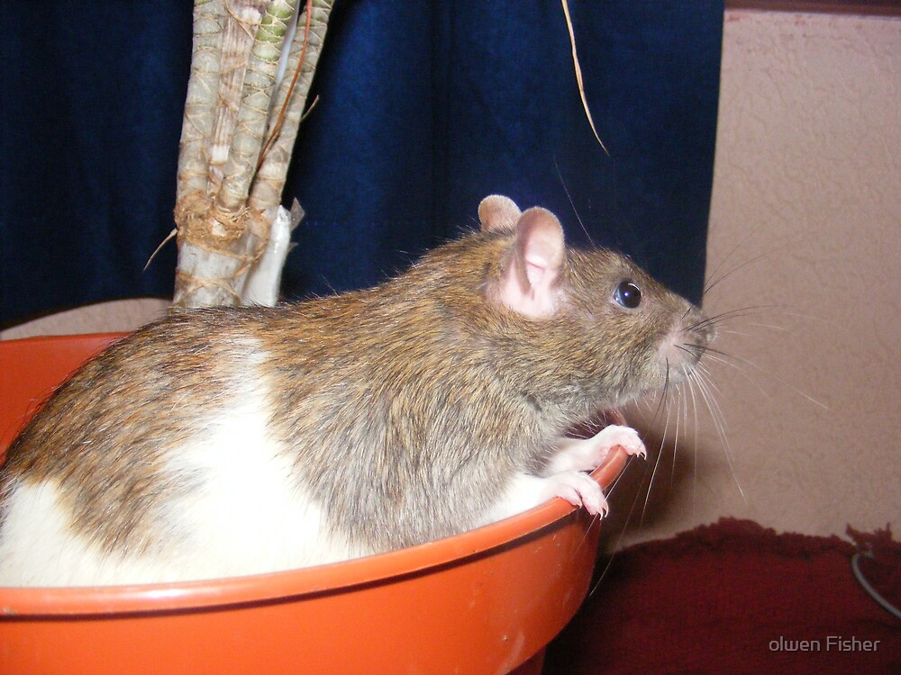 On top of the world Ma!... but slightly worried as to how i get down..... by olwen Fisher