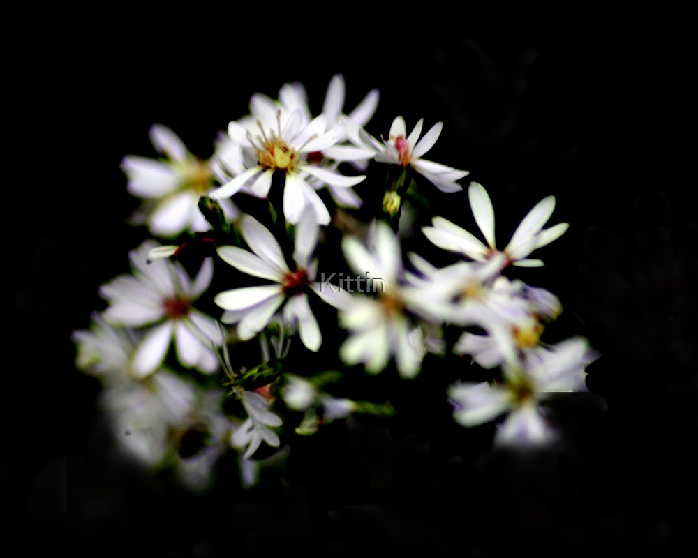 white flowers 02 by Kittin
