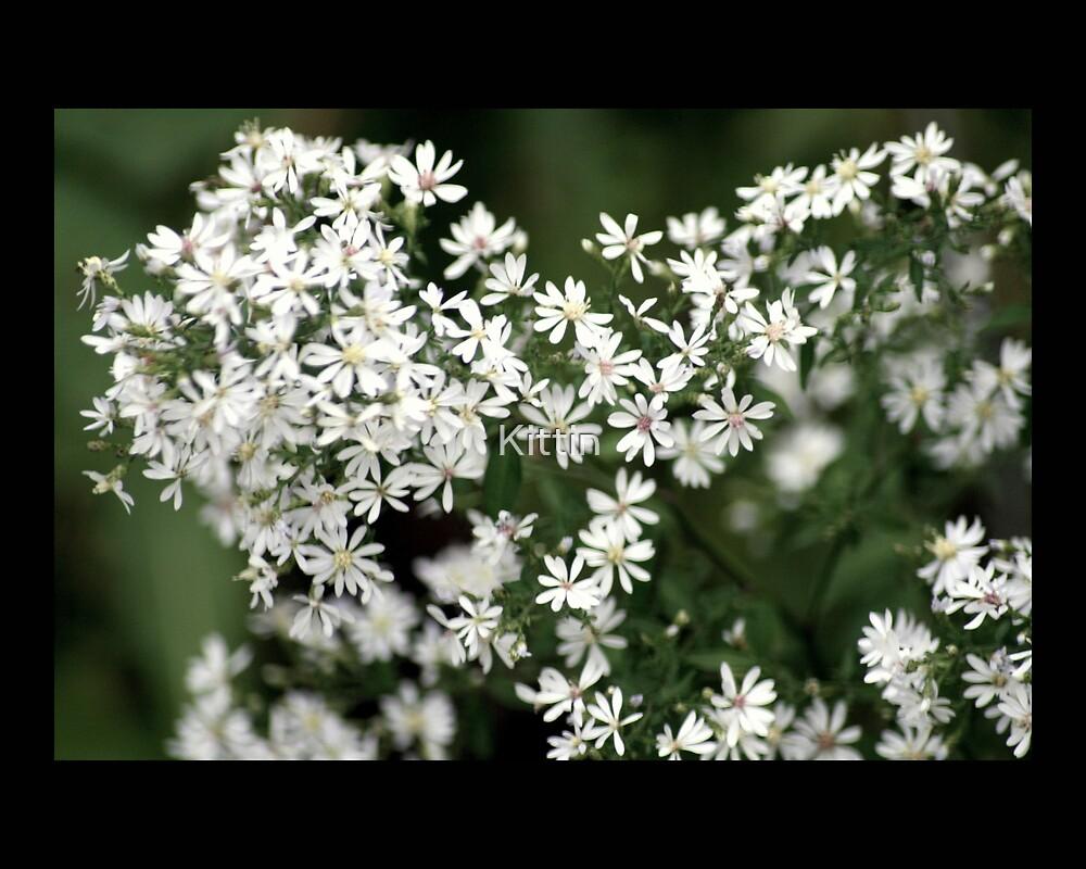 white flowers 01 by Kittin