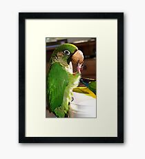 Is This A Good Muzzel! - Bubbles - Maroon-Bellied Conure - NZ Framed Print