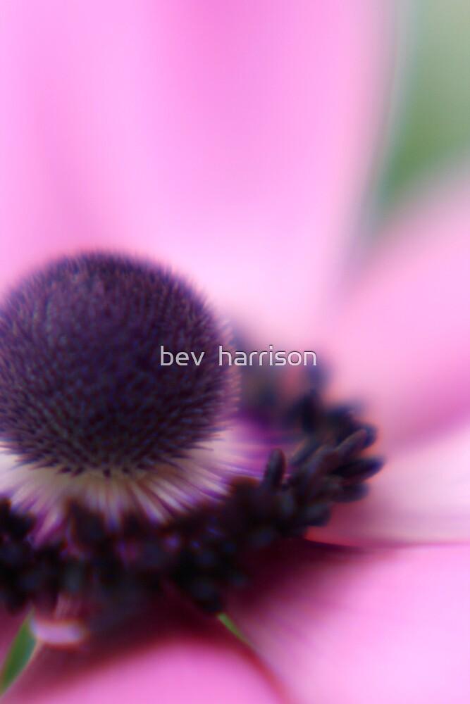 a snippet by bev  harrison