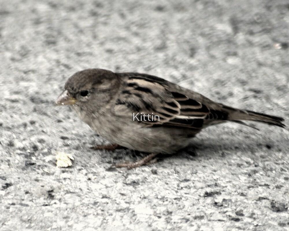 bird 23 by Kittin
