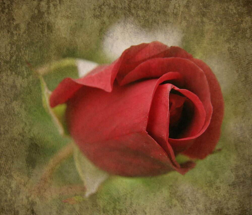 Rose  by KarenMcWhirter