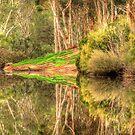 Serendip Sanctuary Reflections by Danielle  Miner