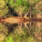 Serendip Sanctuary Reflections 2 by Danielle  Miner
