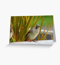 Down The Hatch She Goes! - House Sparrow NZ Greeting Card