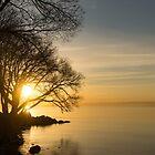 Lacy Sunrise -  by Georgia Mizuleva