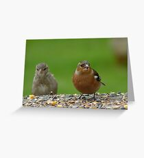 Hey!! Give Me A Wing up! - Chaffinch & Sparrow - NZ Greeting Card