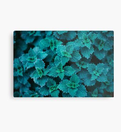 Cold Green Metal Print