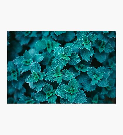 Cold Green Photographic Print