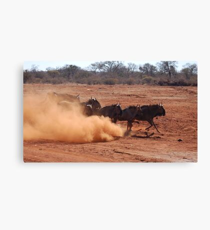 BLUE WILDEBEEST (Connochaetes taurinus) Canvas Print
