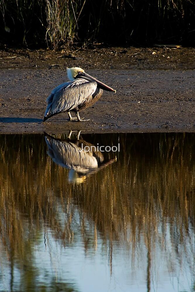 Bayou Pelican by Jonicool