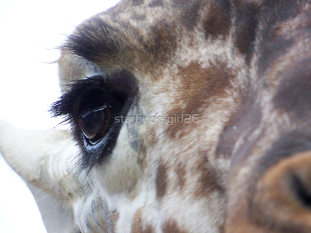 Giraffe Eye by starbucksgirl26