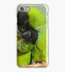 This Is Simply Heavenly!!! - Nandae Conures - NZ Queenspark iPhone Case/Skin