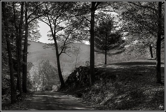 The Road From Here by Wayne King