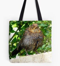 I'll Dry Off With A Little Help From The Sun!! - Juvenile Blackbird - NZ Tote Bag