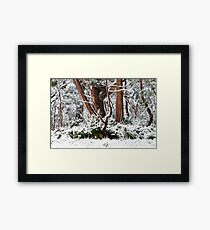 Cradle Mountain National Park Framed Print
