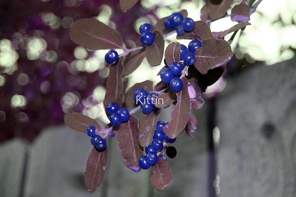 Berries 02 by Kittin