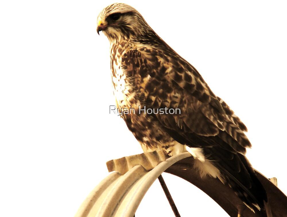 Rough-Legged Hawk - Sepia Tones by Ryan Houston