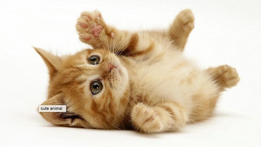 My cute cat <3333 by rawrryeol