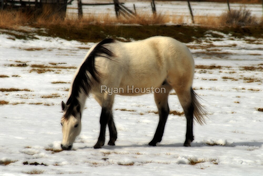 Horse Grazing in Winter Sun by Ryan Houston