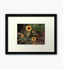 yellow flowers 05/22/17 Framed Print