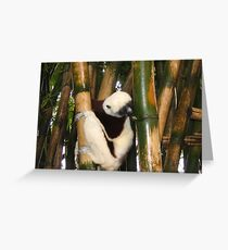 Lemurs  Greeting Card