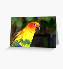 Did You Say Handsome!! - That's Me! - Sun Conure - NZ Greeting Card