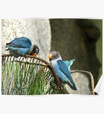 Bendy Branch ...Big Behind ... Surely Not? - Masked Lovebirds - NZ Poster
