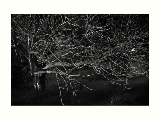 Winter Poem by CatherineYang
