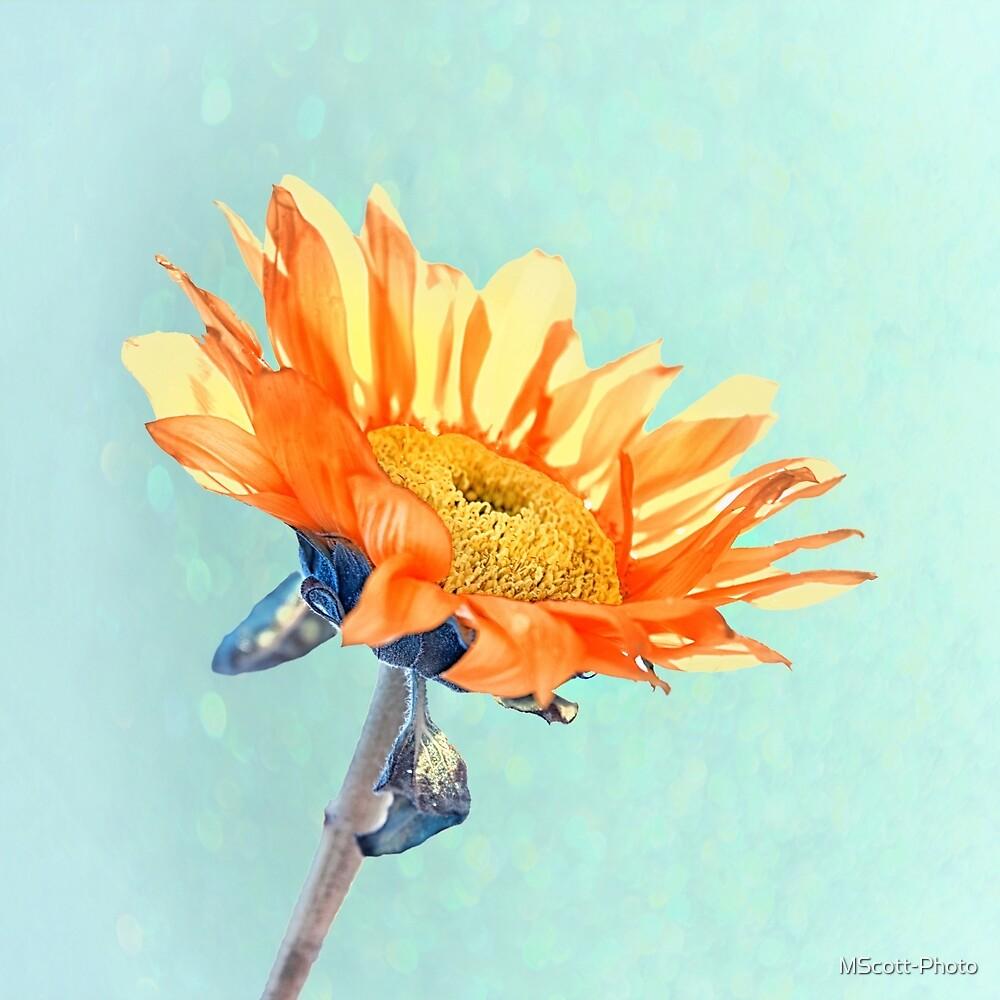 Sunflower by MScott-Photo