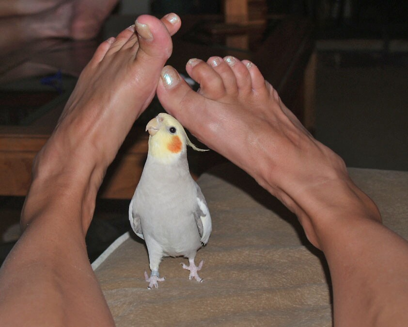 Oh my sweet toes by Lynn Curry