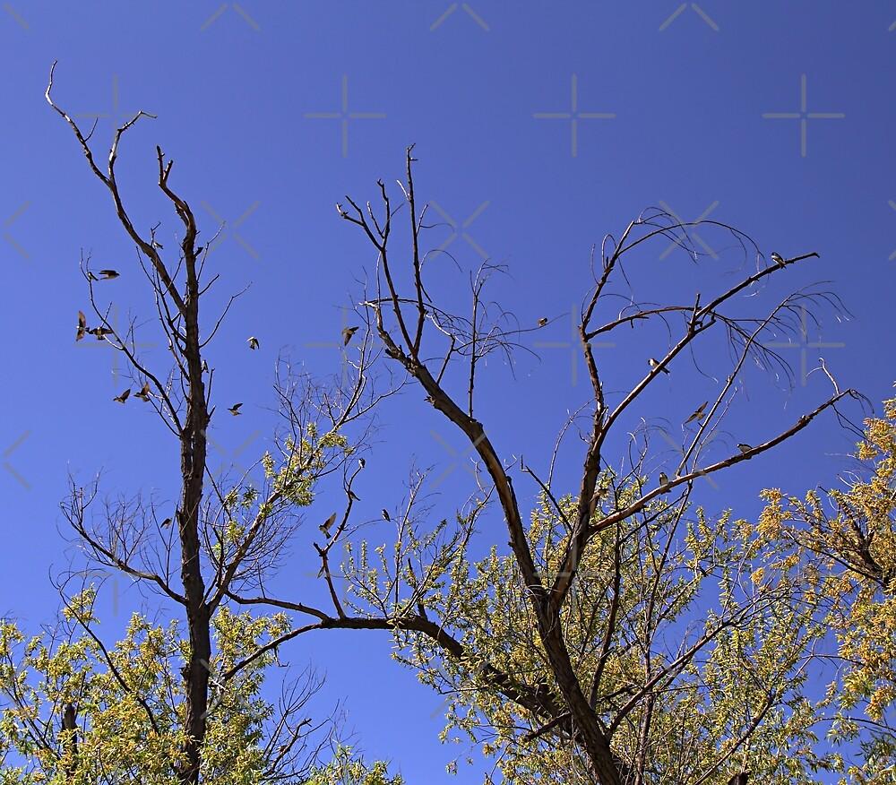 Tree Swallows at San Jacinto Wildlife Area (view enlarged) by CarolM