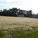Church of the Daisies by finnomanon