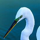 Great Egret with Mating Season Plumage by bengraham