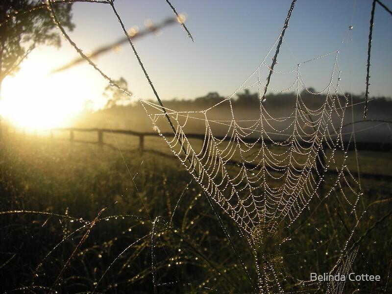 morning dew by Belinda Cottee
