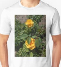 two yellow roses, natural 05/22/17 Unisex T-Shirt
