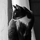 Kitty at the window by deahna