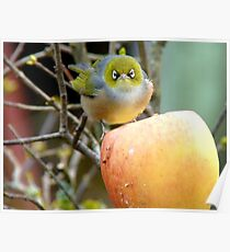 I Once Was Lost But Now I'm Found!! - Silvereye - NZ Poster