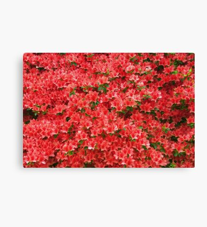 Red Azaleas Canvas Print