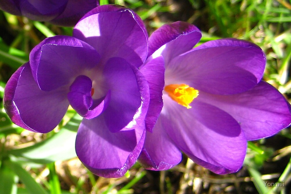 Spring Is Purple And Gold by Yonmei